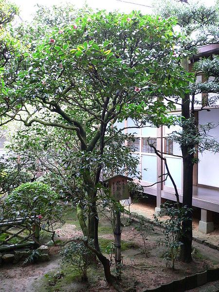 Ficheiro:RyoanJi-Camellia.jpg