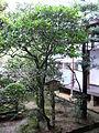 RyoanJi-Camellia.jpg