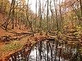 Söderåsens nationalpark, Skärån Nov 1.jpg
