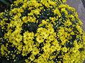 S2006 flowers 8.JPG