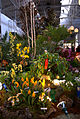 SF Pacific Orchid Show 2010-02-27 103.jpg