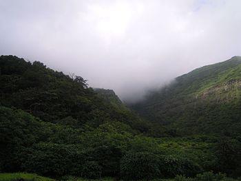 Safari- Tamhani Ghat 1.jpg