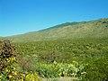 SaguaroNationalPark Arizona.jpg