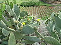 Salina vegetation (3).jpg