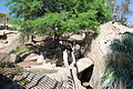 San Diego Zoo Safari Park 98 2014-08-29.JPG