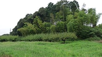 Satoyama - Satoyama, utilizing a plant layer, from bottom, agriculture field, Prunus mume tree for umeboshi, bamboo woods and thicket in Chiba Japan.