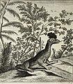 Scheuchzer(1723)-vol2-p378b-crested-dragon.jpg