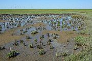 Schleswig-Holstein, Neufelderkoog, Biosphärenreservat Schleswig-Holstein Wadden Sea and adjacent areas NIK 7212.jpg