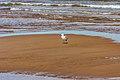 Seagulls Beach Harbour Aboiteau, Cape Pelee (40518836171).jpg