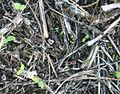Seedlings-emerging-from-litter.jpg