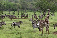 Selous Game Reserve-8.jpg