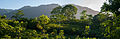 Selva del Estado Anzoategui en Chaguaramal.jpg