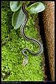Serpentes (6084945551).jpg