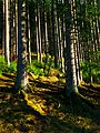 Shadows In The Green - panoramio.jpg