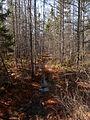 Sifton Bog - London, Ontario 04.jpg