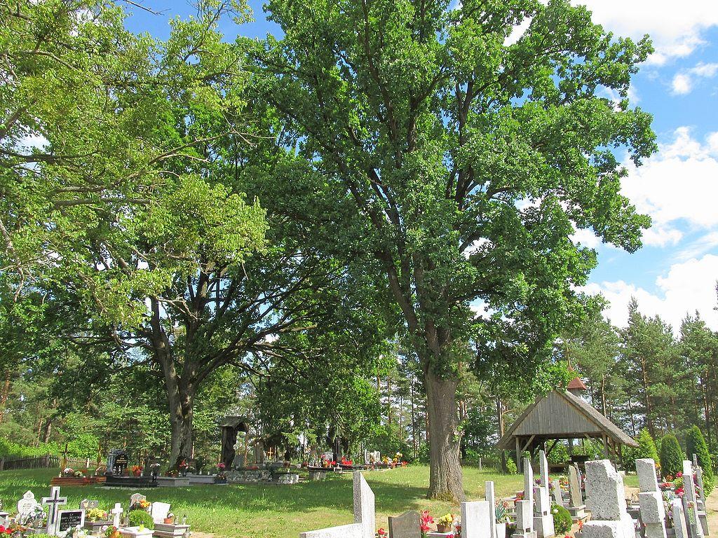 1024px-Skromna_wiata_pe%C5%82ni%C4%85ca_funkcj%C4%99_Domu_Pogrzebowego_w%C5%9Br%C3%B3d_pi%C4%99knych_drzew.JPG