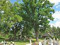 Skromna wiata pełniąca funkcję Domu Pogrzebowego wśród pięknych drzew.JPG