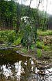 """Skulptur """"Homo Sapiens"""" des Künstler Federico Schiaffino im Naturschutzgebiet Möhnetal.jpg"""