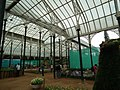 Snap from Lalbagh Flower Show Aug 2013 8129.JPG