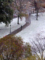 Snow! (2085788036).jpg
