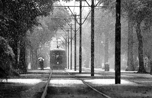 Snow falls on St. Charles Avenue in December 2008. Snow in New Orleans by evreniz.jpg