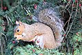 Squirrel - October 2009 (4040173607).jpg