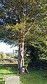 St John the Evangelist Pool Quay Powys, Wales 33.jpg