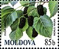 Stamps of Moldova, 030-09.jpg