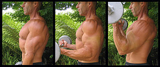 Biceps curl muscle exercise