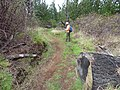 Starr-170225-0020-Rubus niveus-trail reroute with Kim-Lower Waiohuli Trail Polipoli-Maui (32998687400).jpg