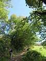 Steep bridleway to Hole - geograph.org.uk - 1516238.jpg