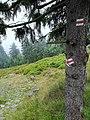 Stog Izerski, trails (3).jpg