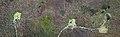 Stone Circles Machrie Moor 3 2 1 6 Topview.jpg