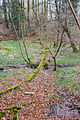 Stukenbrok - 2016-03-19 - Wehrbachtal (8).jpg