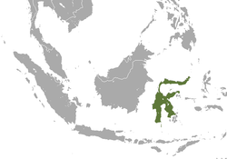 Sulawesi Stripe-faced Fruit Bat area.png