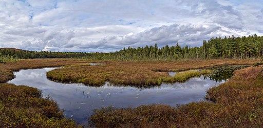 Sunday Creek Bog