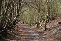Sunken bridleway - geograph.org.uk - 1253029.jpg