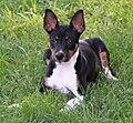 Sylvia Decker Terrier.jpg