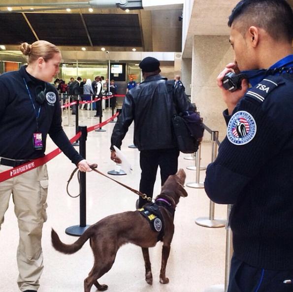 TSA Passenger Screening Canine