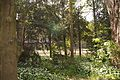 TU Delft Botanical Gardens 4.jpg