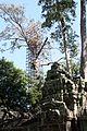 Ta Prohm - panoramio (7).jpg