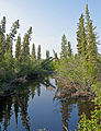 Taiga and stream south of Inuvik, NT.jpg