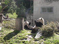Panda breeding center in Wolong