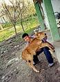 Tajikistan (523123076).jpg