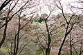 Tama Forest Science Garden 2012.4.jpg