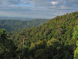 Taman Negara - View over the canopy