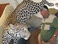 Taxidermist Leopard.jpg