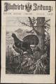 Tetrao urogallus - 1888 - Print - Iconographia Zoologica - Special Collections University of Amsterdam - UBA01 IZ17100327.tif