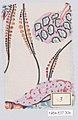 Textile sample MET DP10861.jpg