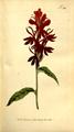 The Botanical Magazine, Plate 320 (Volume 9, 1795).png
